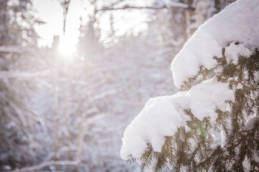 neige_sapin