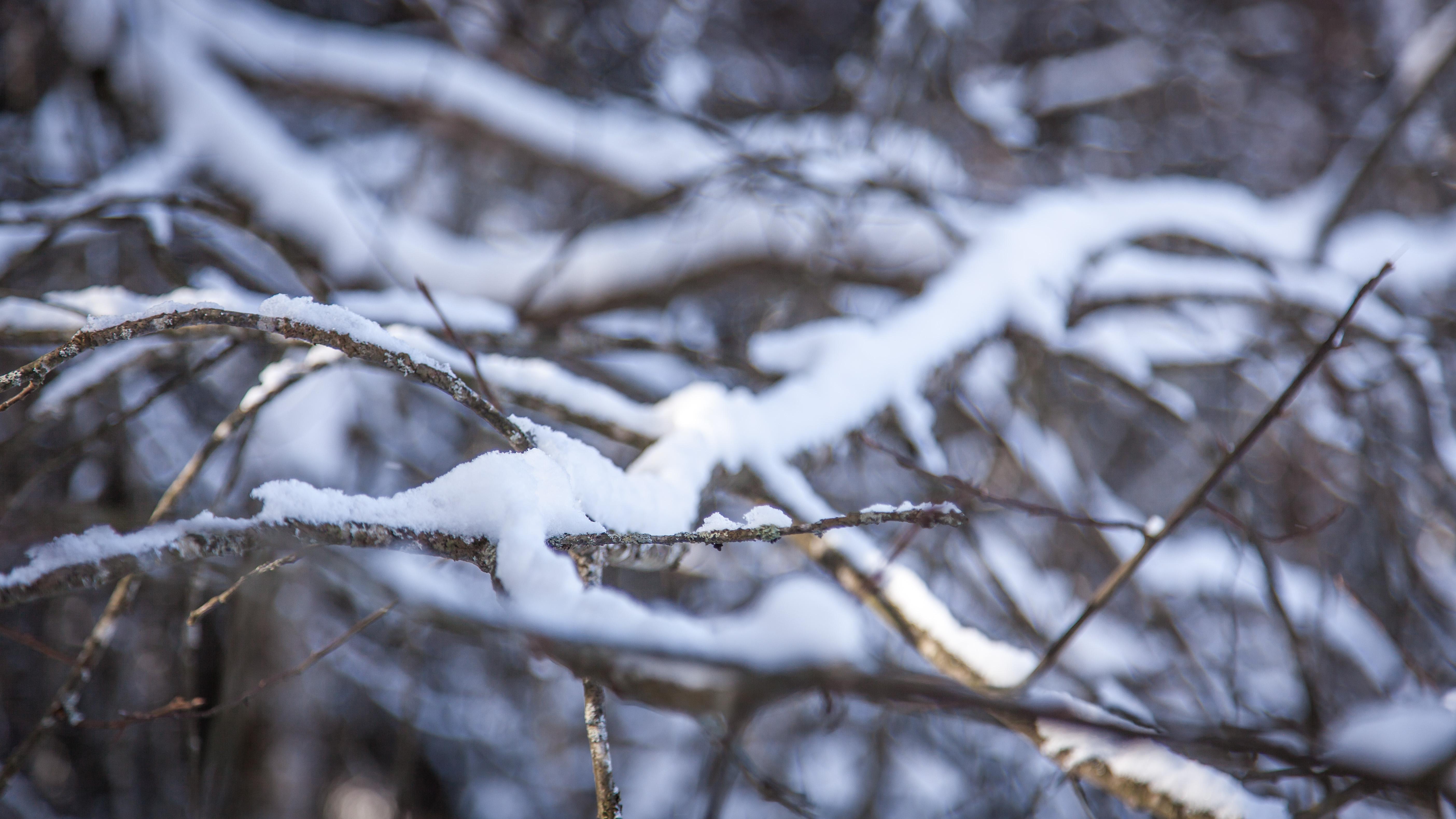 branche_hiver
