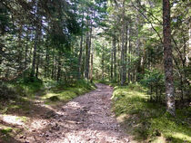 Espace Trail