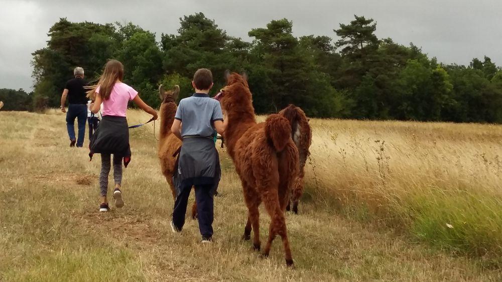 Abbéville-la-rivière - A walk with llamas