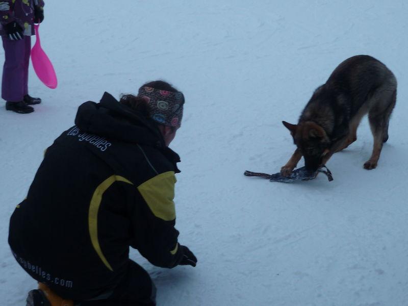 Neige et chien d'avalanche