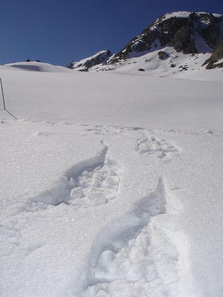 Sortie raquettes encadrée : découverte du versant de la Balme