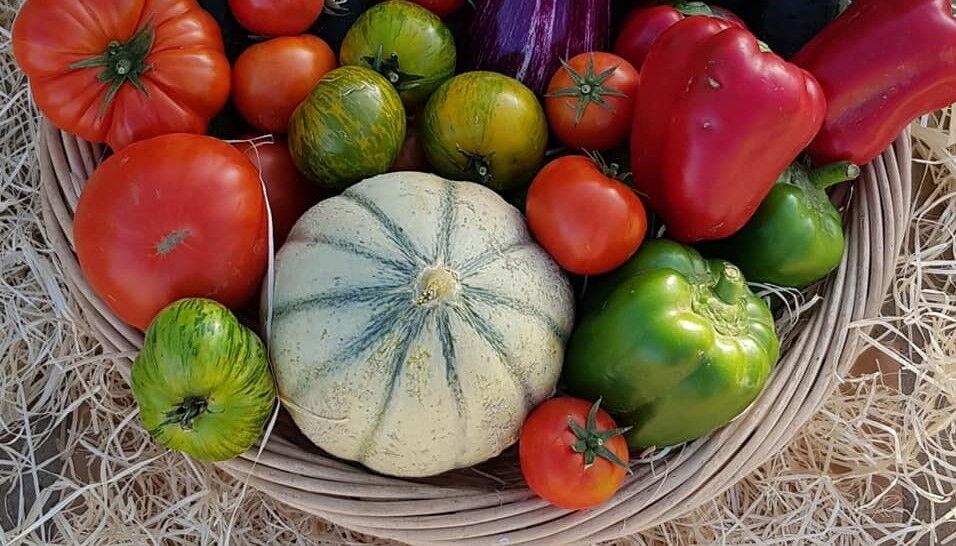 La Pouletterie vegetables farm
