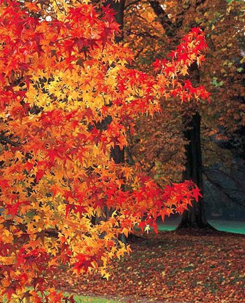 Forêt Domaniale de Choqueuse