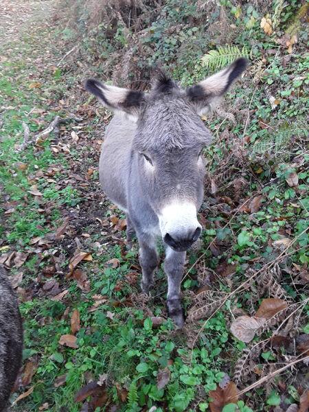 Balades et randonnées à pied avec les ânes du Rafinenc