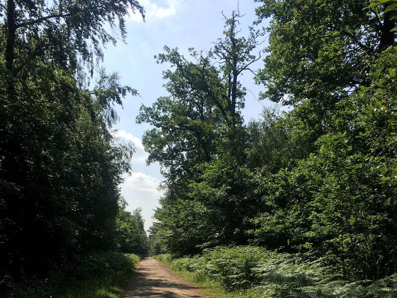 Forêt de Montceaux-lès-Meaux
