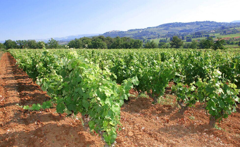 Lafran-Veyrolles Vineyard - Vineyard - Jouve-Férec