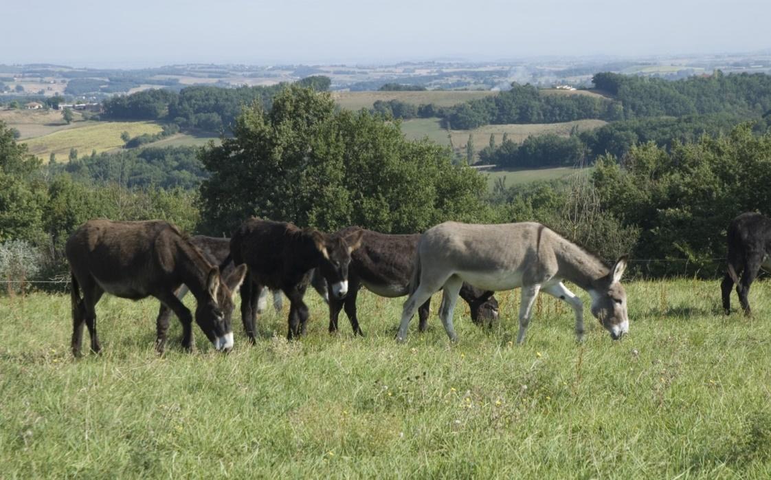La ferme des ânes d'autan