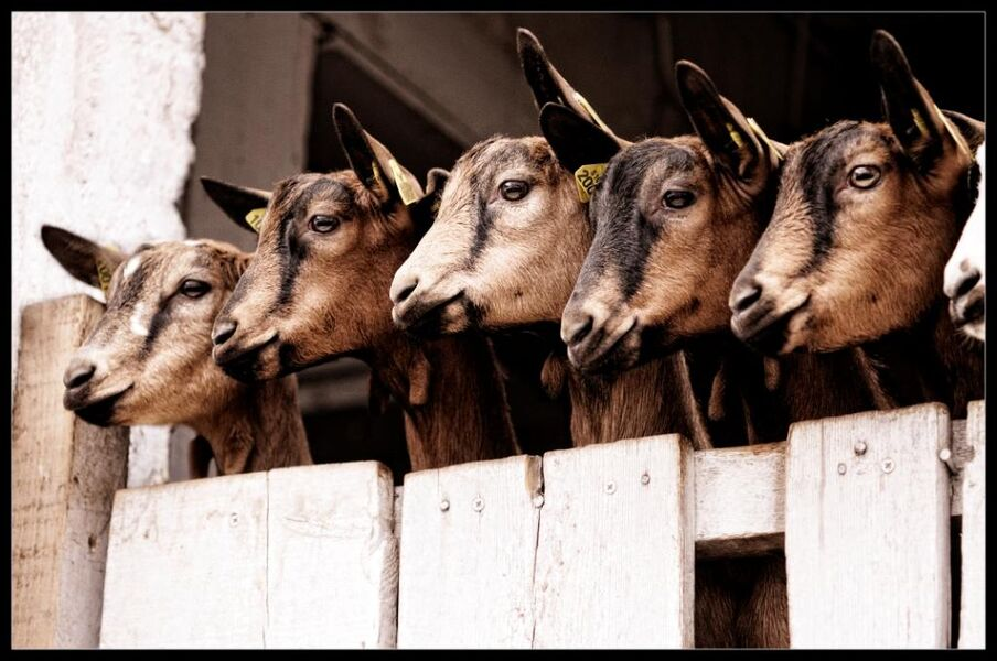 La Chèvrerie de Chavière