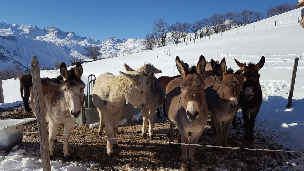 Donkey rental