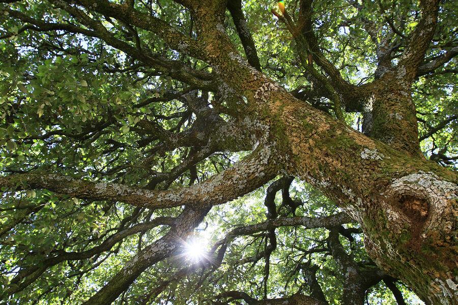 Randonnée Le tour des pins