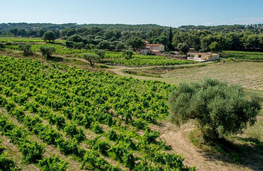 Domaine de la Garenne - Vineyard - Beatrix de Balincourt