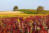 Vue sur le vignoble Ⓒ DEJONGHE