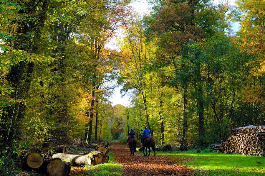 Forêt de Malvoisine_1
