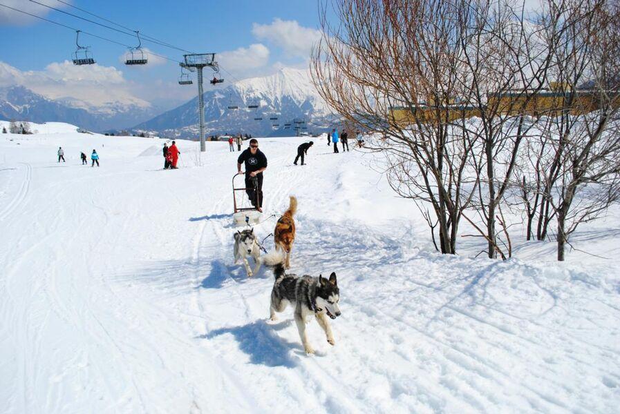 Initiation à la conduite d'attelage de chiens de traineau