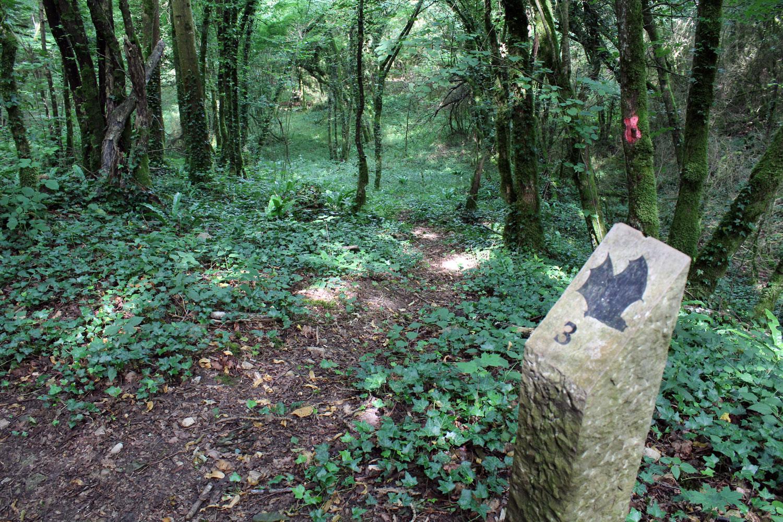 """Forêt - ENS """"Les Coteaux de Saint-Roch"""""""