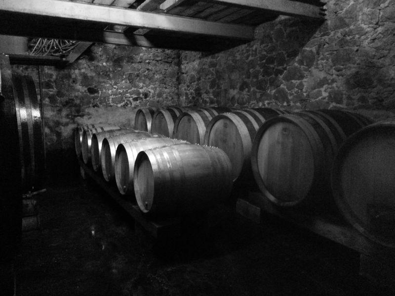 Castell Reynoard Vineyard - Cellar - Julien Castell