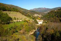 Randonnée : Biodiversité des Hautes-Cévennes d'Ardèche avec Ardèche Randonnées - Saint-Pierre-de-Colombier