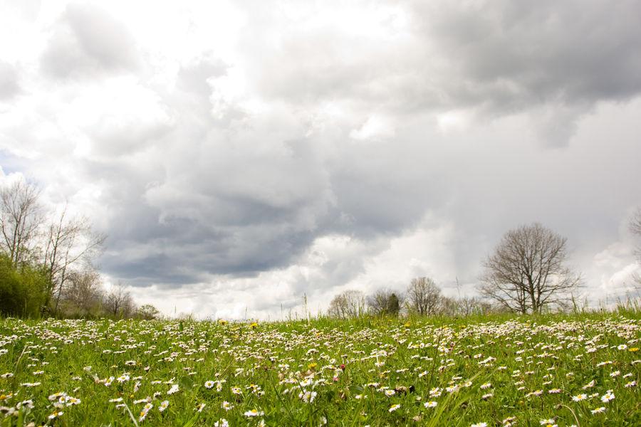 Bonnan prairie