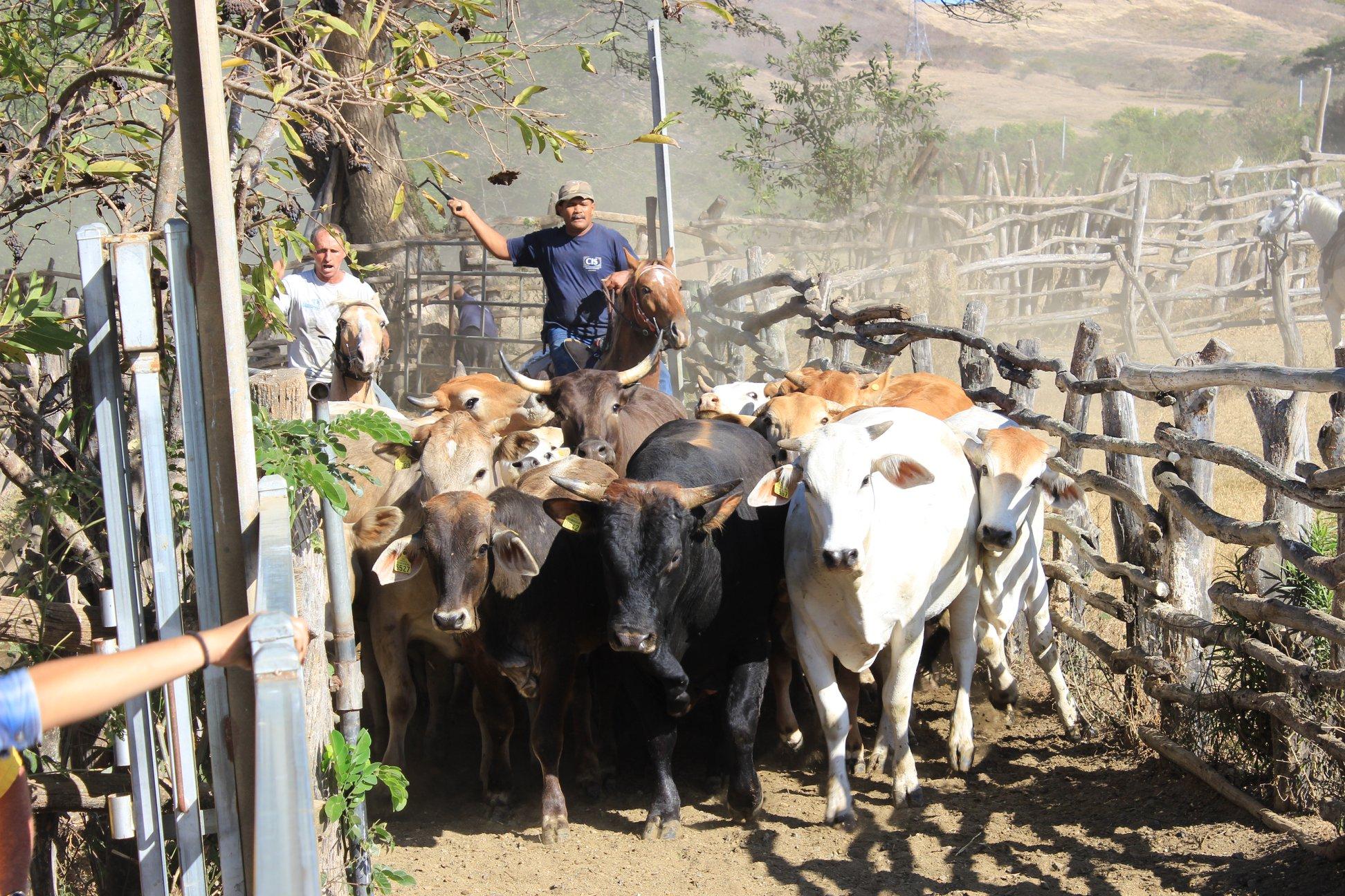 Ranch du Carré 9