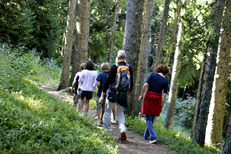 Sentier découverte forestière