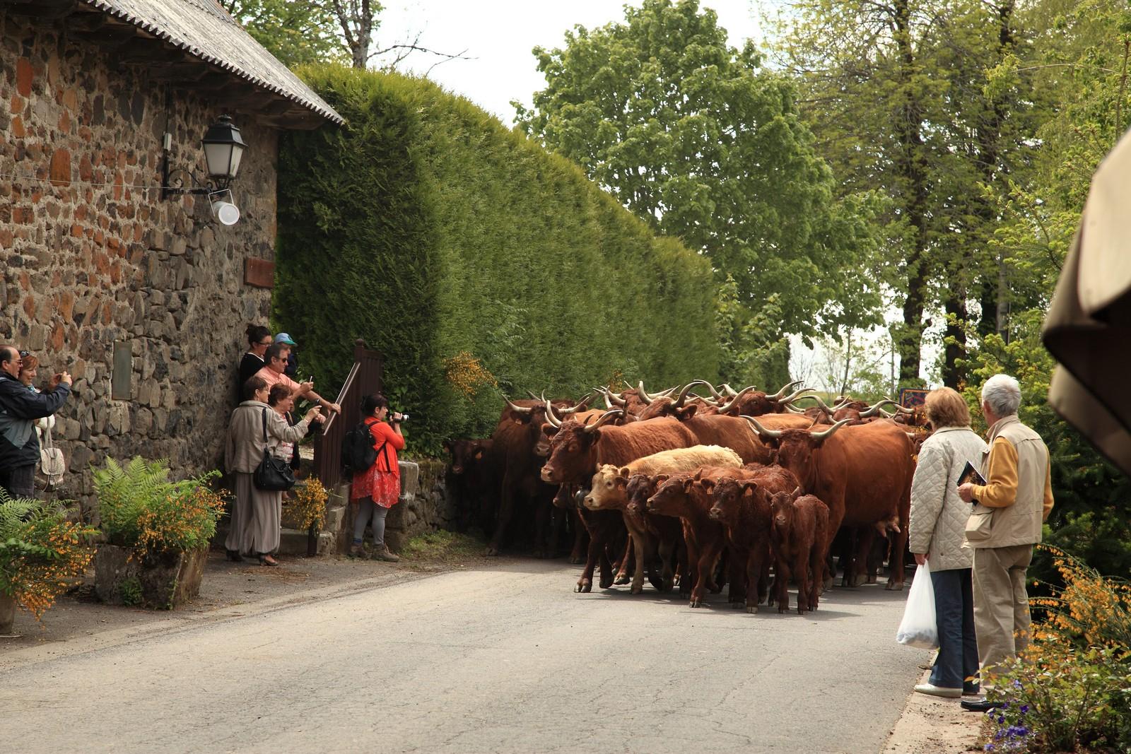 Fête des Fromages à Pailherols - ANNULEE
