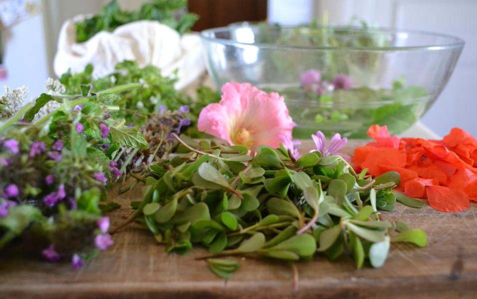 Balade botanique - Croquez des plantes sauvages