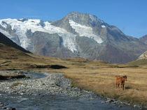 Haute Route Glaciaire - Vallon du Clou 2