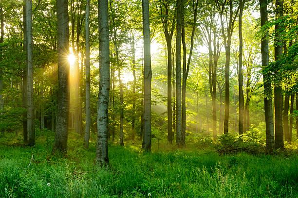 Sortie Sylvothérapie, Marche respirée en forêt